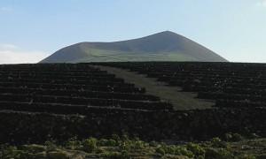 Einmaliger Weinanbau auf Lanzarote.