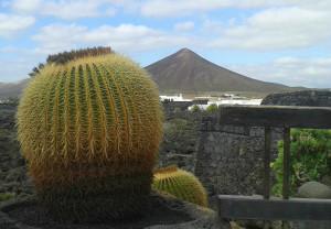 Reiseleitung auf Lanzarote und Fuerteventura.