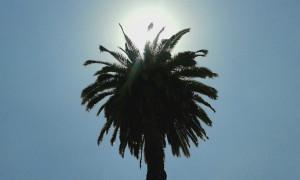 Palme und strahlend blauer Himmel